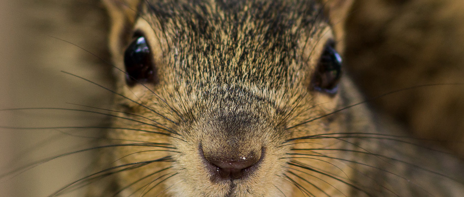 Squirrel Close-ups