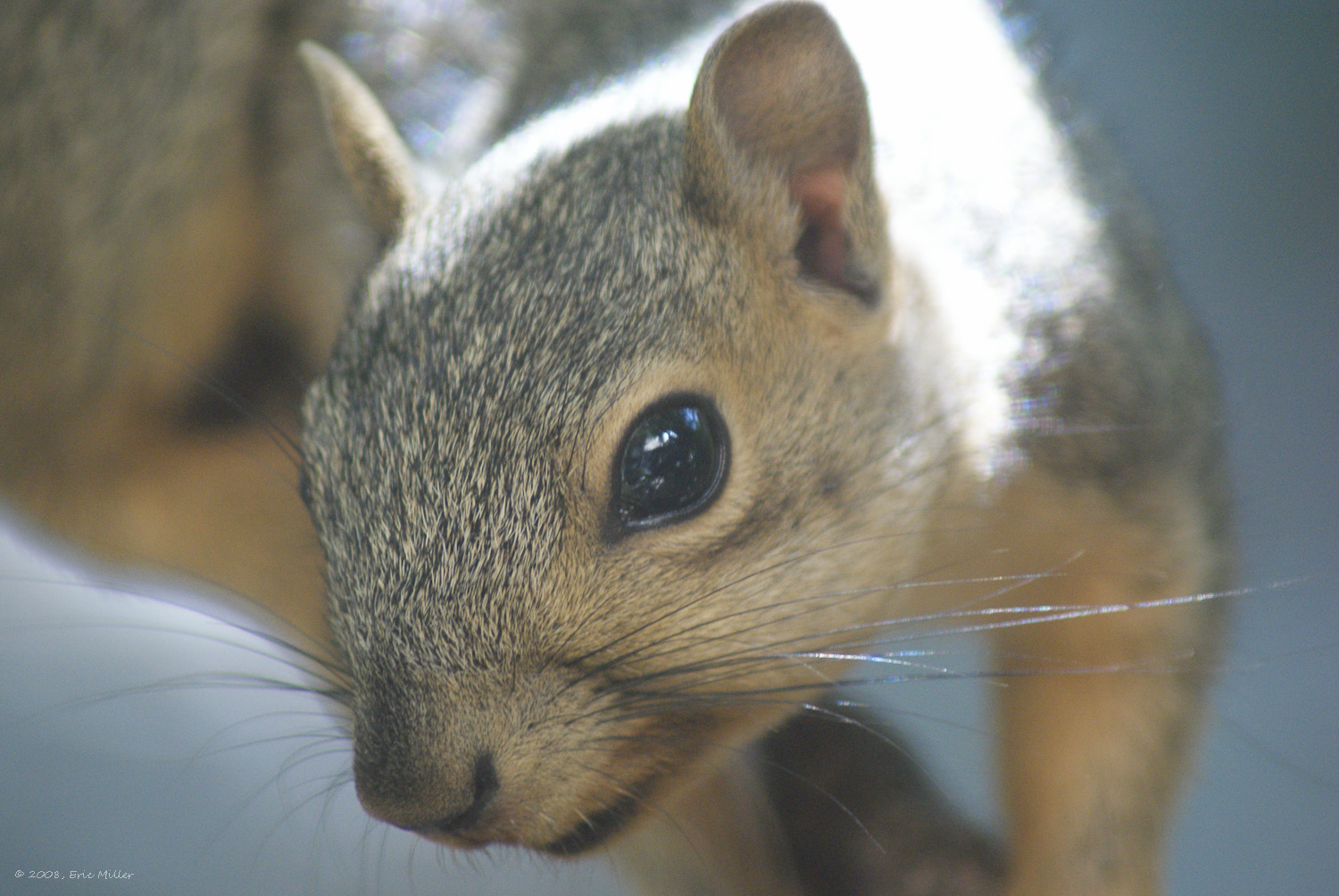 2008/squirrels/DSC00180.jpg