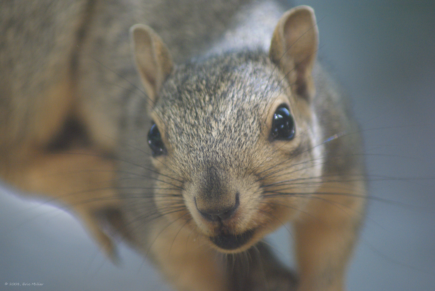 2008/squirrels/DSC00182.jpg