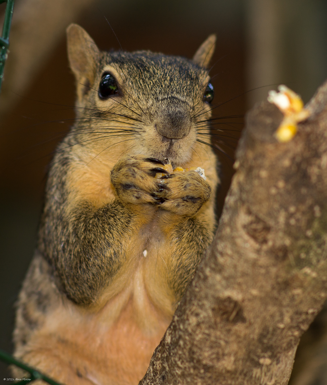 2013/Squirrel/DSC07943.jpg