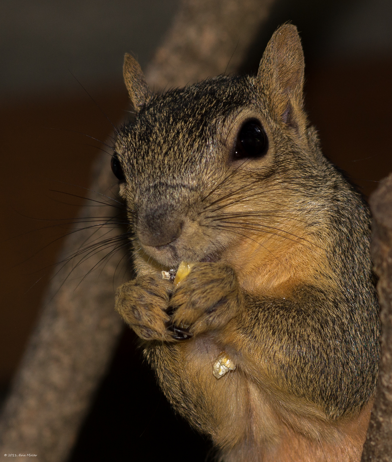 2013/Squirrel/DSC07947.jpg