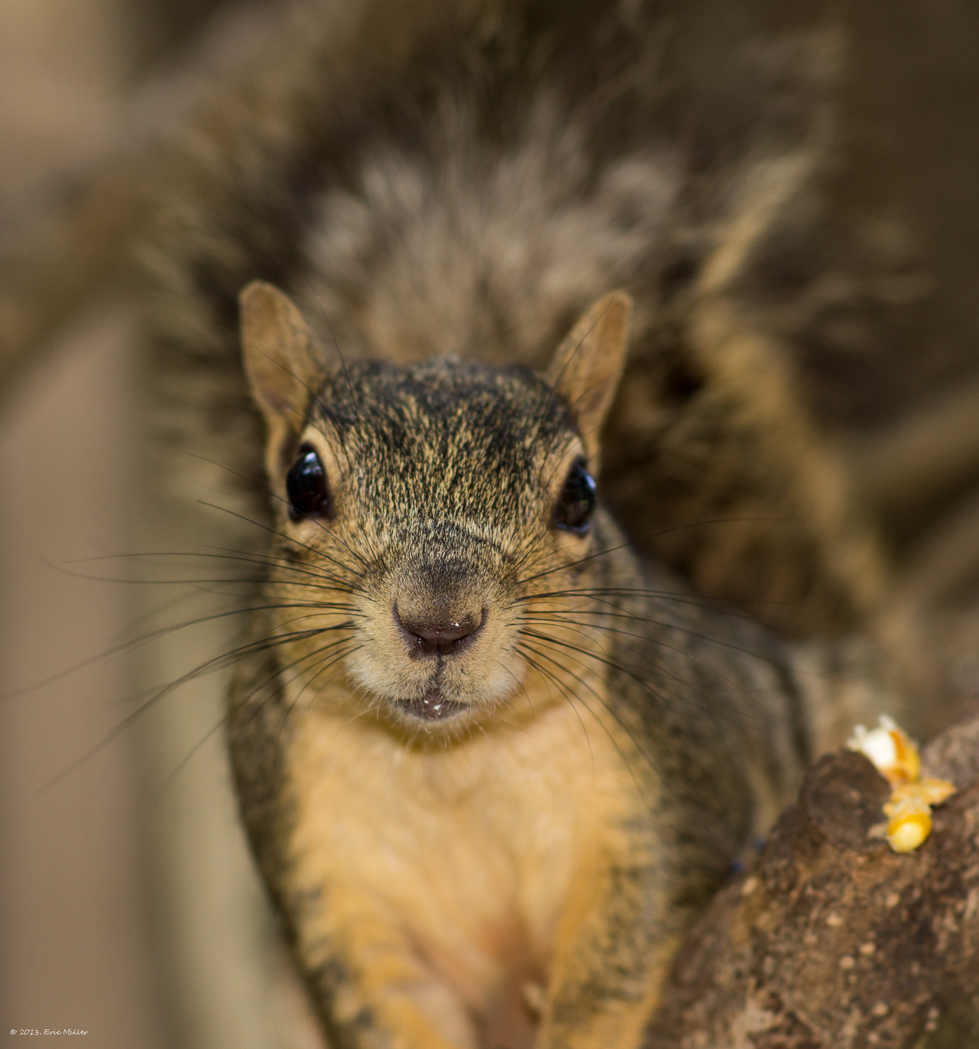 2013/Squirrel/DSC07951.jpg