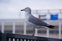 seagull at the ICA