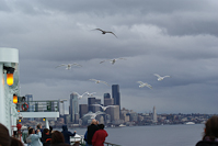 gulls flying alongside the ferry