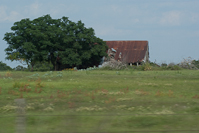 lots of old farmhouses and buildings along rural Texas roads.  I tried to get shots of as many as possible.