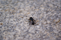 a fly on concrete