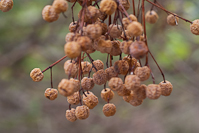 some dried up berries
