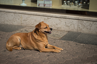 street dog in Zagreb