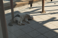 this little mačka was my 2nd best friend in Krk
