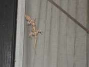 a lizard on the door to Cabin 4